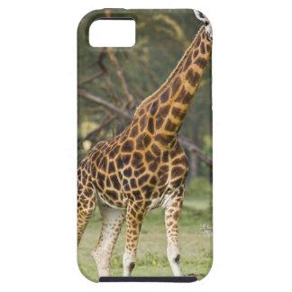 África. Kenia. La jirafa de Rothschild en el lago  iPhone 5 Protector