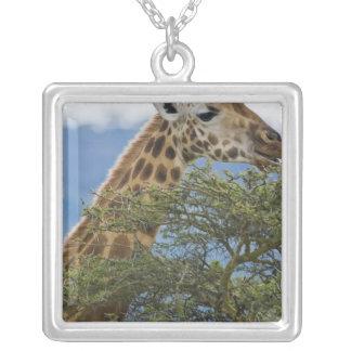 África Kenia La jirafa de Rothschild en el lago Grimpolas Personalizadas