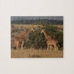 África, Kenia, Lewa traga, dos reticulados Puzzles Con Fotos