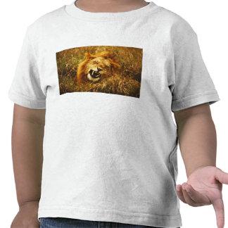 África, Kenia, Maasai Mara. León masculino. Camisetas
