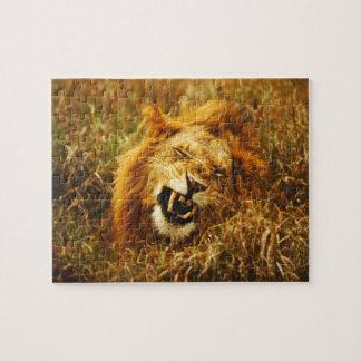 África, Kenia, Maasai Mara. León masculino. Salvaj Rompecabezas Con Fotos