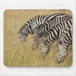 África, Kenia, Maasai Mara Mousepads