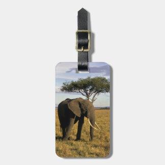 África, Kenia, Maasai Mara. Un elehpant en Etiquetas De Equipaje