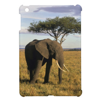 África, Kenia, Maasai Mara. Un elehpant en