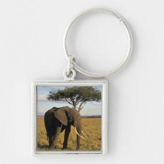 África, Kenia, Maasai Mara. Un elehpant en Llavero Cuadrado Plateado