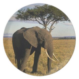 África, Kenia, Maasai Mara. Un elehpant en Plato Para Fiesta