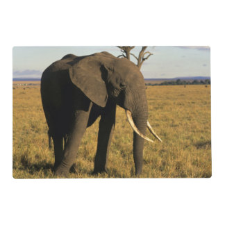 África, Kenia, Maasai Mara. Un elehpant en Salvamanteles