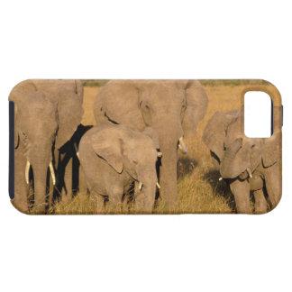 África, Kenia, Masai Mara. Elefante africano iPhone 5 Cárcasas