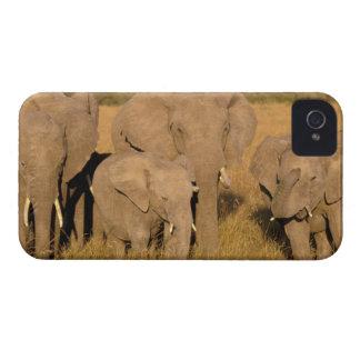 África, Kenia, Masai Mara. Elefante africano iPhone 4 Carcasas