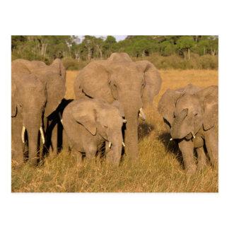 África Kenia Masai Mara Elefante africano Postales