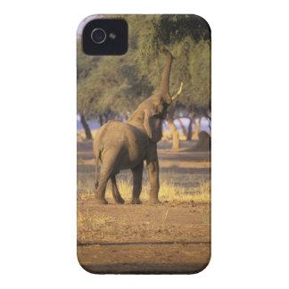 África, Kenia, Masai Mara. Elefante (Loxodonta Case-Mate iPhone 4 Coberturas