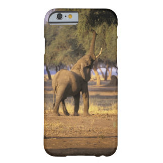 África, Kenia, Masai Mara. Elefante (Loxodonta Funda De iPhone 6 Barely There
