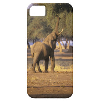 África, Kenia, Masai Mara. Elefante (Loxodonta iPhone 5 Coberturas