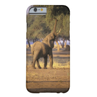 África, Kenia, Masai Mara. Elefante (Loxodonta Funda Barely There iPhone 6