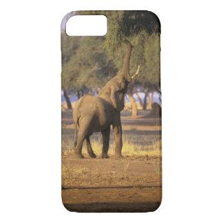 África, Kenia, Masai Mara. Elefante (Loxodonta Funda iPhone 7