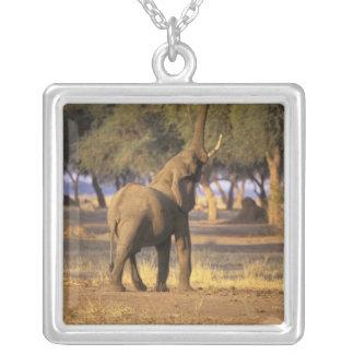 África Kenia Masai Mara Elefante Loxodonta Colgante