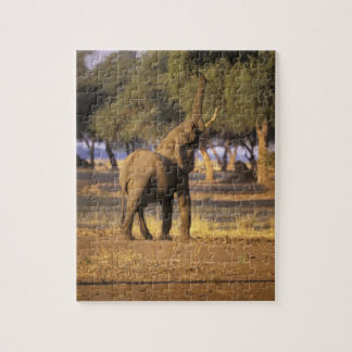 África, Kenia, Masai Mara. Elefante (Loxodonta Rompecabezas