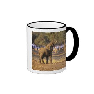 África Kenia Masai Mara Elefante Loxodonta Taza De Café