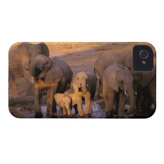 África, Kenia, Masai Mara. Elefantes (Loxodonta iPhone 4 Fundas