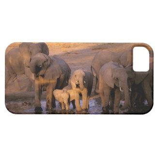 África, Kenia, Masai Mara. Elefantes (Loxodonta iPhone 5 Cobertura