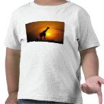 África, Kenia, Masai Mara. Jirafa (jirafa Camiseta