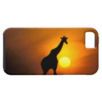 África, Kenia, Masai Mara. Jirafa (jirafa iPhone 5 Case-Mate Cárcasas