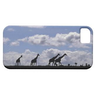 África, Kenia, Masai Mara. Jirafas (Giraffa iPhone 5 Case-Mate Cobertura