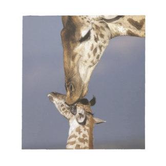 África, Kenia, Masai Mara. Jirafas (jirafa Bloc De Notas