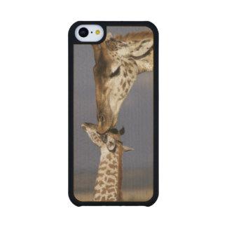 África, Kenia, Masai Mara. Jirafas (jirafa Funda De iPhone 5C Slim Arce