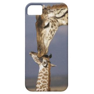África, Kenia, Masai Mara. Jirafas (jirafa iPhone 5 Coberturas