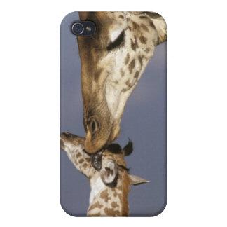 África Kenia Masai Mara Jirafas jirafa iPhone 4/4S Fundas