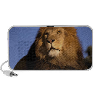 África, Kenia, Masai Mara. León masculino (Panther Mp3 Altavoces
