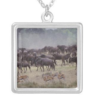 África Kenia Masai Mara Manadas del Gazelle Grimpola Personalizada