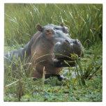 África, Kenia, Masai Mara NR. Un hipopótamo de la  Azulejos Ceramicos