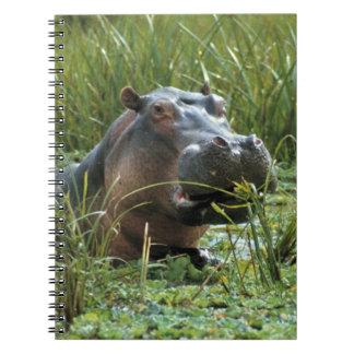 África, Kenia, Masai Mara NR. Un hipopótamo de la  Libretas Espirales