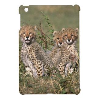 África; Kenia; Masai Mara; Tres cachorros del guep