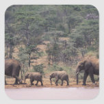África, Kenia, Nanyuki, Mpala. Africano Pegatina Cuadrada