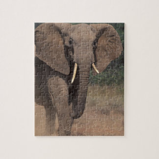 África, Kenia, Nanyuki, Mpala. Elefante africano Rompecabeza