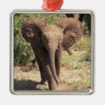 África, Kenia, parque nacional de Amboseli. Africa Ornamentos De Reyes