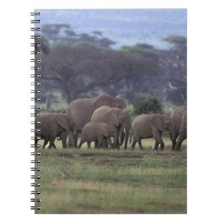 África, Kenia, parque nacional de Amboseli. Africa Libreta Espiral