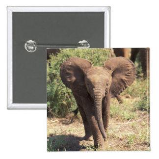 África, Kenia, parque nacional de Amboseli. Africa Pin Cuadrado