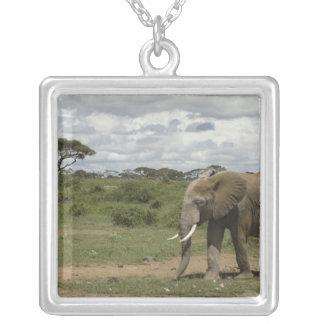 África Kenia parque nacional de Amboseli elefan Grimpolas Personalizadas
