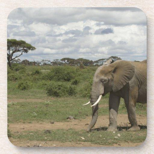 África, Kenia, parque nacional de Amboseli, elefan Posavasos