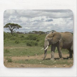 África, Kenia, parque nacional de Amboseli, elefan Tapete De Ratones