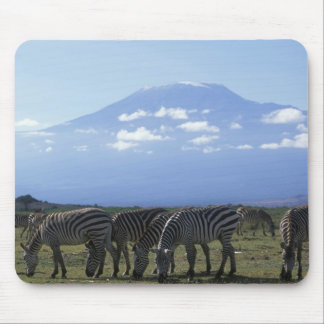 África, Kenia, parque nacional de Amboseli, manada Alfombrilla De Raton
