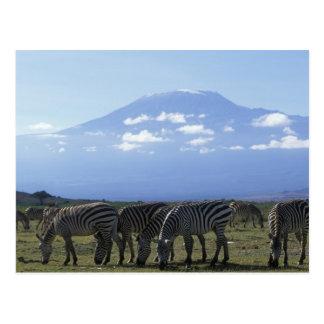 África, Kenia, parque nacional de Amboseli, manada Tarjetas Postales
