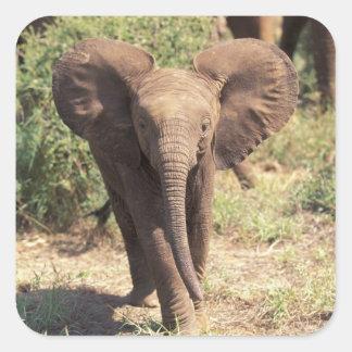 África, Kenia, parque nacional de Amboseli. Pegatina Cuadrada