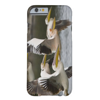 África. Kenia. Pelícanos blancos en vuelo en el Funda Para iPhone 6 Barely There