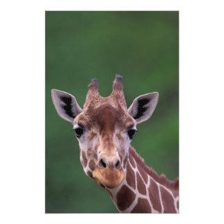 África, Kenia, rancho del impala. Reticulado Fotografías