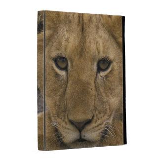 África, Kenia. Retrato de un león